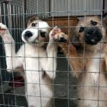 Заставка для - Социализация бездомных собак, попавших в трудную жизненную ситуацию
